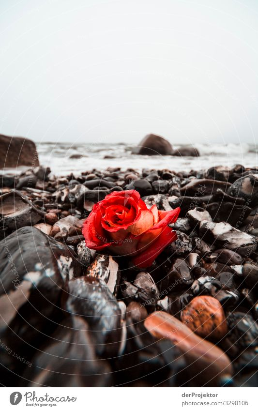 Commemoration on the beach of Sassnitz Vacation & Travel Tourism Far-off places Freedom Environment Nature Landscape Plant Winter Waves Coast Beach Baltic Sea