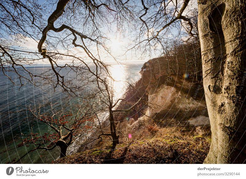 Caspar David Friedrich 4.0 near Sassnitz Vacation & Travel Tourism Trip Adventure Far-off places Freedom Hiking Environment Nature Landscape Plant Winter