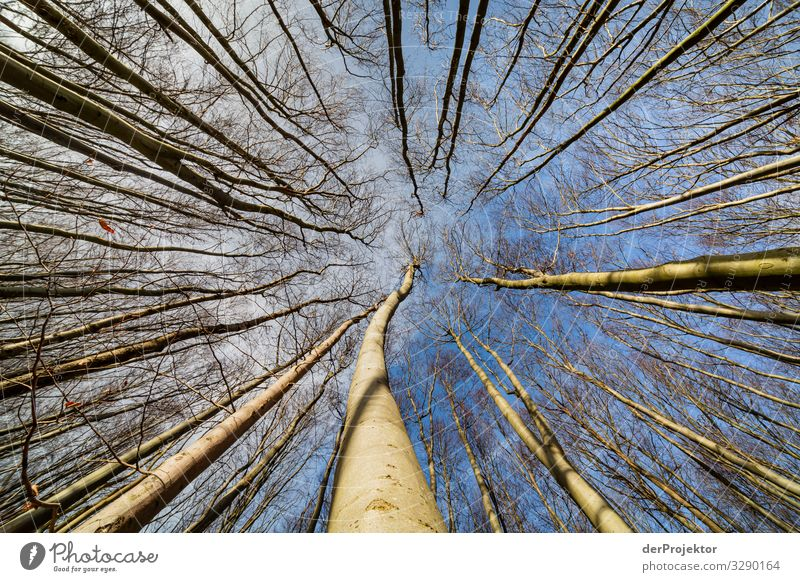 Beech forest on Rügen Vacation & Travel Tourism Trip Adventure Far-off places Freedom Hiking Environment Nature Landscape Plant Winter Beautiful weather Tree