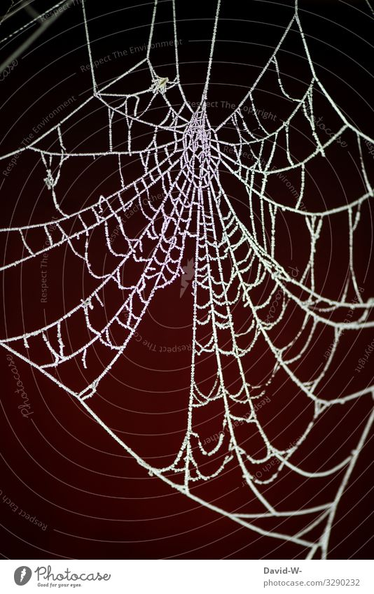 The icemen are at the door icehall chill Frost Spider's web Winter Pattern White Ice Nature Frozen Deserted Structures and shapes Freeze Detail Colour photo