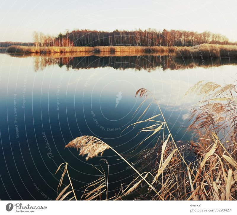 Free floating Environment Nature Landscape Plant Air Water Cloudless sky Horizon Winter Beautiful weather Reeds Forest Island Pond Lake Calm Idyll