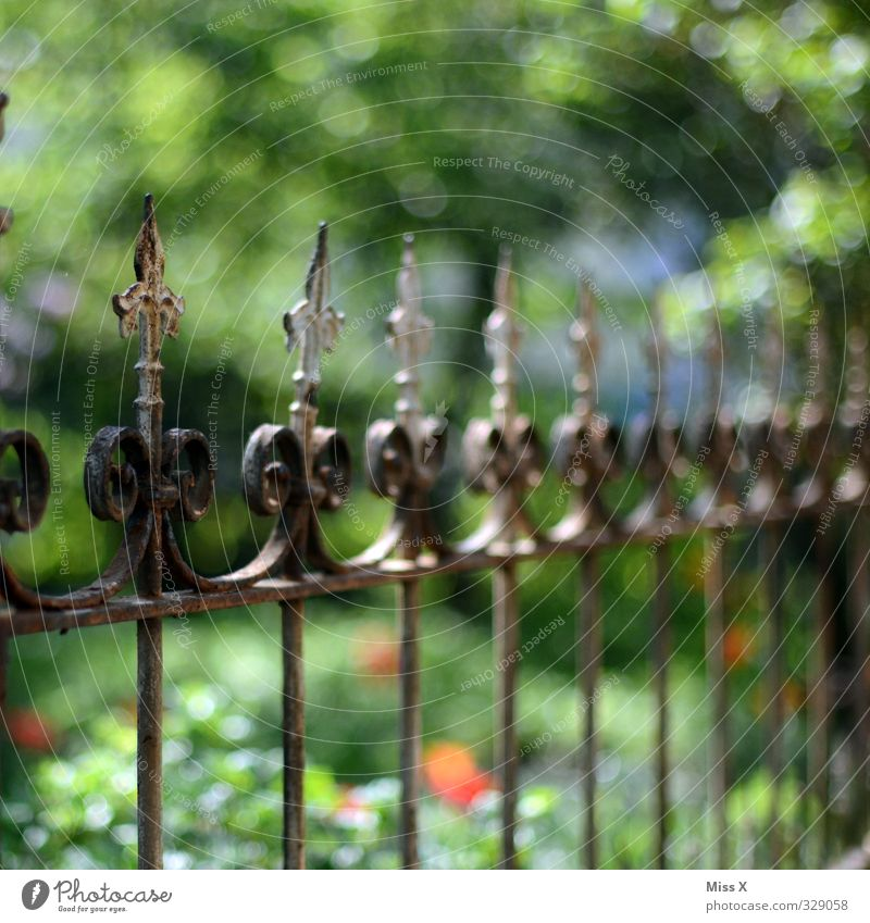 Pointies in the crown Flat (apartment) Garden Old Fence Wrought iron Metalware Decoration Colour photo Multicoloured Exterior shot Close-up Detail Pattern