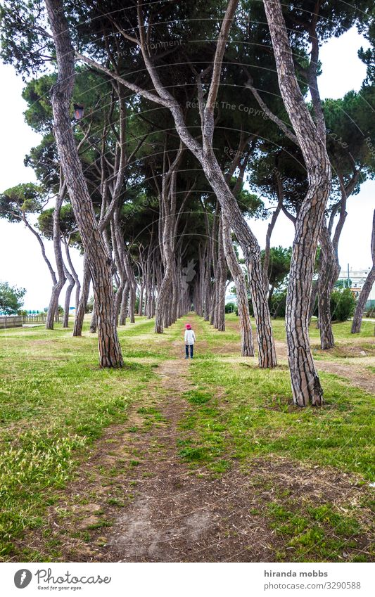 avenue Child Boy (child) Infancy Body 1 Human being 3 - 8 years Environment Nature Landscape Plant Sky Summer Beautiful weather Tree Park Forest Lakeside