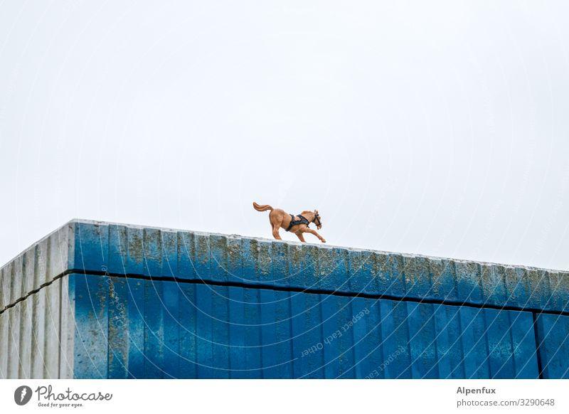 Animal Lanes & trails Movement Happy Wild Dream Adventure Walking Change Threat Horse Running Surrealism Whimsical Brash Ride