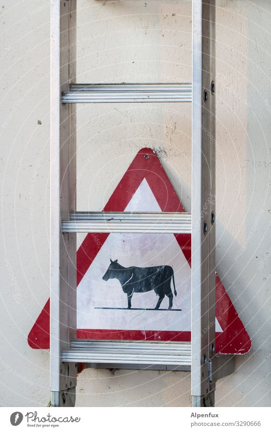 Attention oncoming traffic ! Animal Farm animal Cow Ladder Signage Warning sign Road sign Caution Fear of heights Dangerous Adventure Surprise Warning label