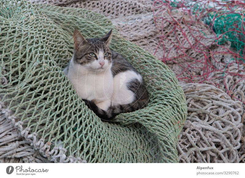Cat Animal Calm Joy Contentment Lie Esthetic Cute Cool (slang) Protection Safety Mysterious Network Pet Trust Brave