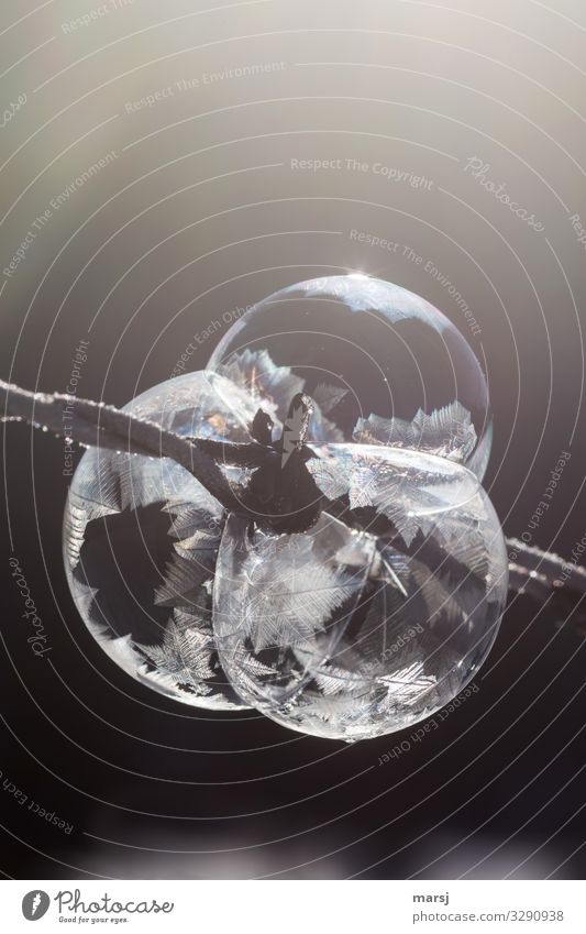 Winter Cold Exceptional Together Ice Dream Power Uniqueness Transience Round Might Frost Athletic Relationship Teamwork Soap bubble