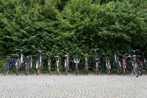 emission-free Healthy Fitness Cycling Bicycle Environment Nature Park Transport Passenger traffic Road traffic Gray Green Red Black Silver