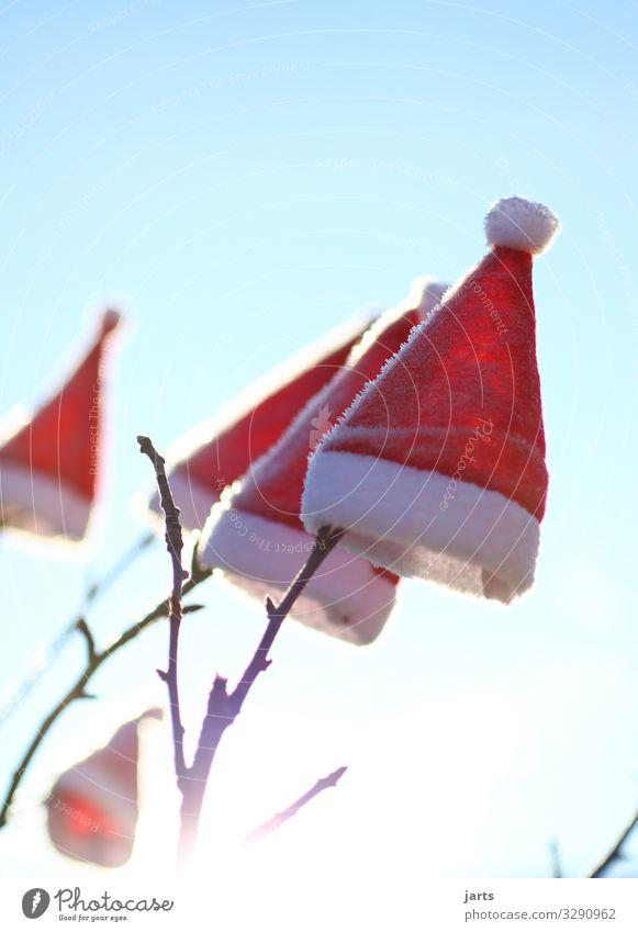 winter caps Cap Joie de vivre (Vitality) Ease Santa Claus hat Branch Tree Christmas tree Christmas & Advent Anti-Christmas Winter Colour photo Exterior shot