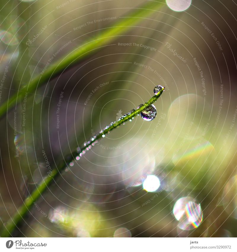 water drop on a blade of grass Nature Plant Drops of water Beautiful weather Grass Meadow Fresh Healthy Glittering Bright Wet Natural Round Green Calm