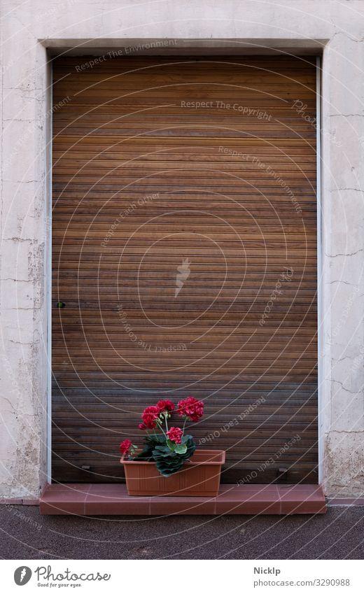 Plant White Red Flower Window Art Brown Design Retro Elegant Idyll Authentic Romance Transience Past Kitsch