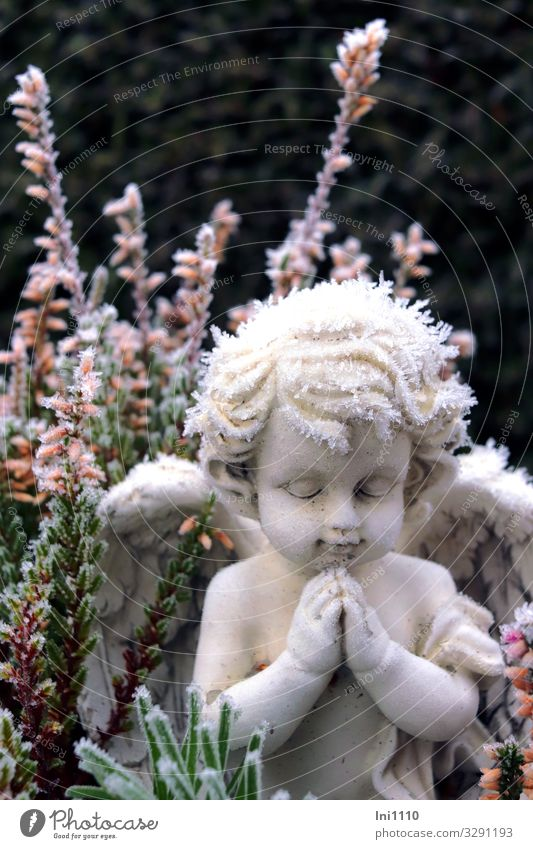 Plant Blue Green White Hand Winter Black Garden Stone Park Wing Sign Symbols and metaphors Angel Figure Memory