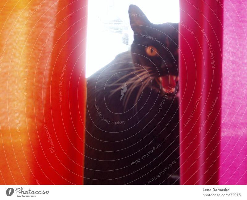 Wild Cat Light Drape Snarl Domestic cat Hiding place