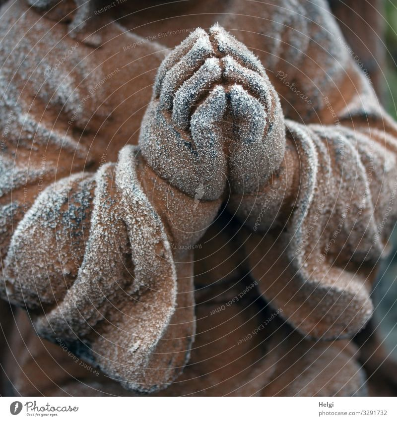 Praying hands of an angel covered with hoarfrost Winter Ice Frost Angel Hand Stone Sign Freeze Esthetic Exceptional Uniqueness Cold Brown White Emotions Hope