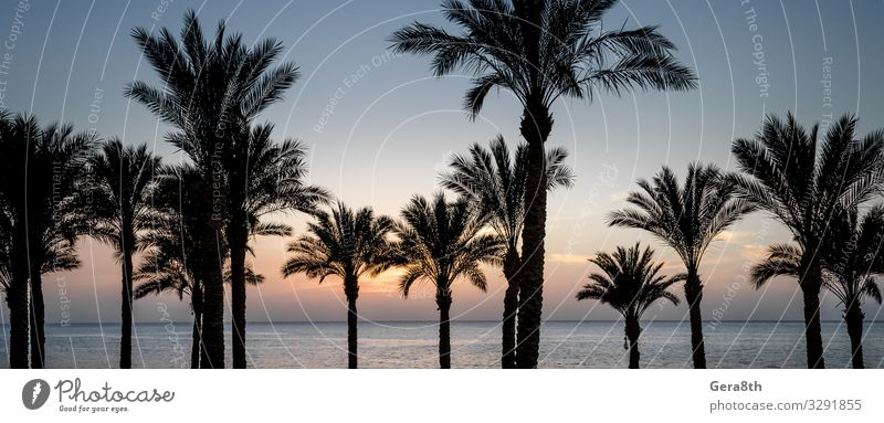 silhouette of palm trees and the Red Sea in Egypt Relaxation Vacation & Travel Summer Sun Beach Ocean Waves Fingers Nature Landscape Plant Clouds Climate Tree