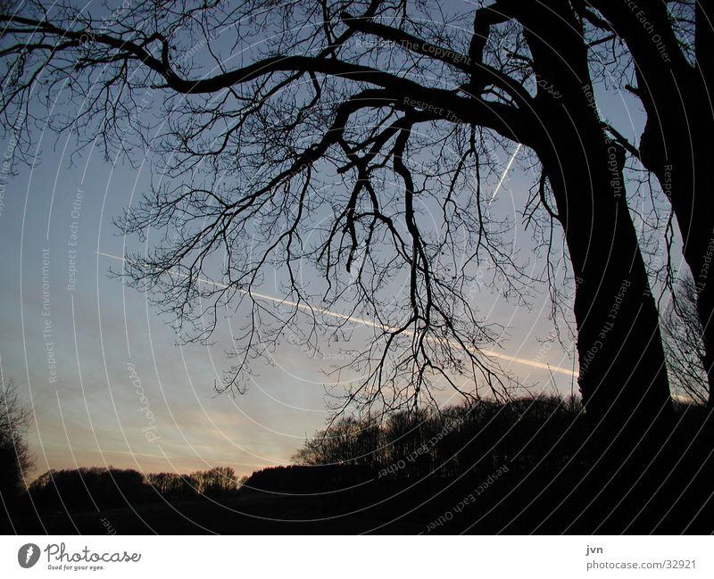 cross Twilight Cross Tree Dusk Date Silhouette pay Vapor trail