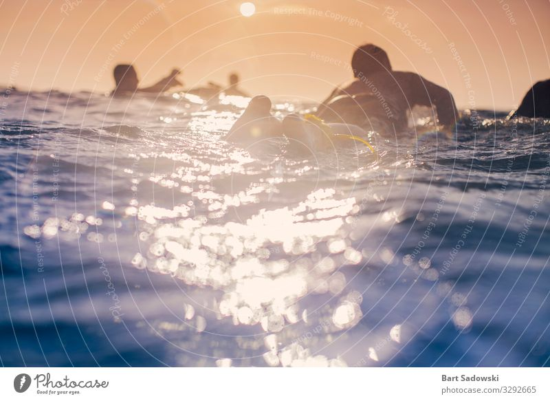 The Paddle out Relaxation Swimming & Bathing Freedom Sun Ocean Waves Sports Aquatics Surfboard School Water Pacific Ocean On board Fitness Wet Joy Adventure