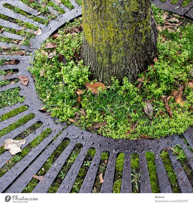 surrounded Tree Tree trunk Round Gray Green Grating Surround Circle Circular Garden Bed (Horticulture) Natural growth Foliage plant Weed Autumn Autumn leaves