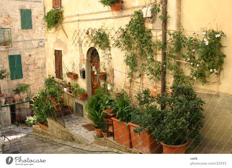 Tuscan entry Living or residing House (Residential Structure) Garden Plant Flower Bushes Small Town Building Door Stand Old Authentic Cliche Entrance Italy