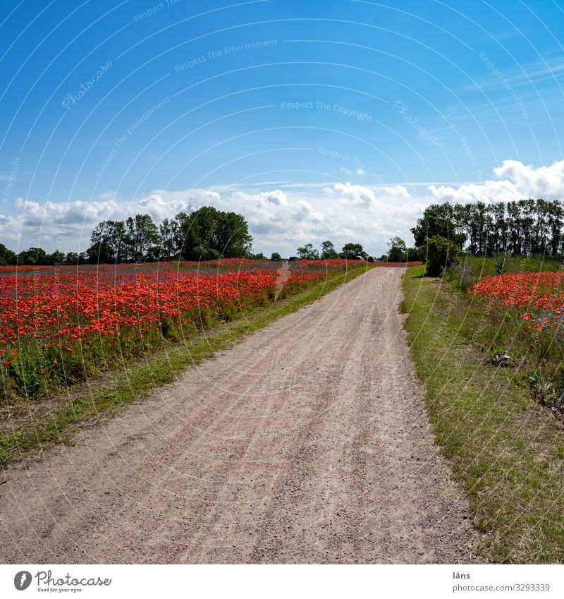 Sky Vacation & Travel Nature Summer Landscape Environment Lanes & trails Tourism Exceptional Trip Hiking Field Earth Beautiful weather Blossoming