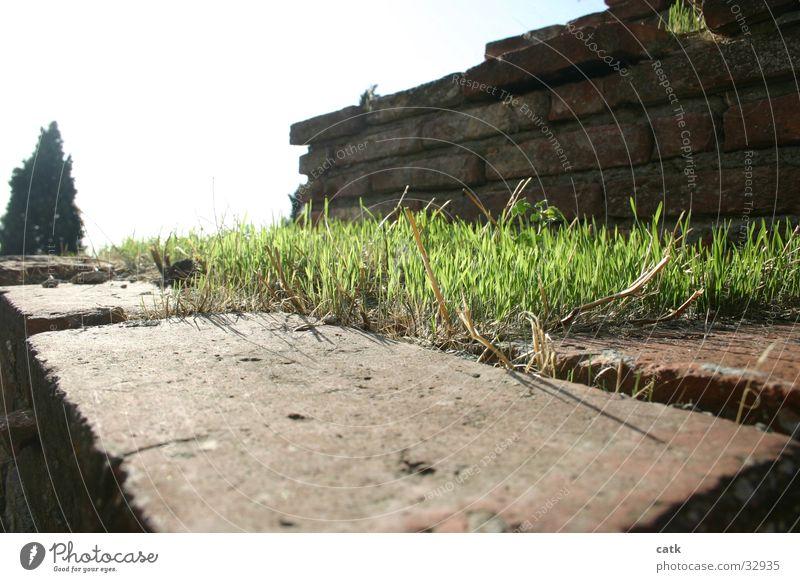 Old Tree Green Grass Garden Stone Wall (barrier) Italy Historic Tuscany