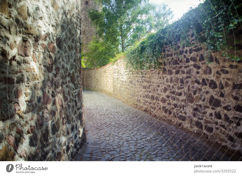 Wall of Silence Summer Town Tree Street Warmth Wall (building) Lanes & trails Wall (barrier) Authentic Historic City trip Old town Long World heritage Ivy