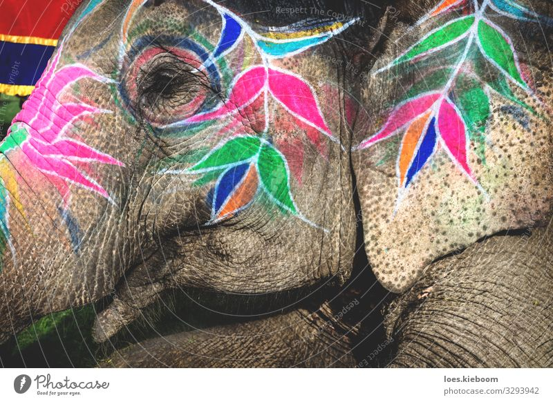 Holi elephant at Elephant Festival in Jaipur, Rajasthan, India Design Vacation & Travel Event Culture Animal Animal face 1 Feasts & Celebrations Exotic Blue