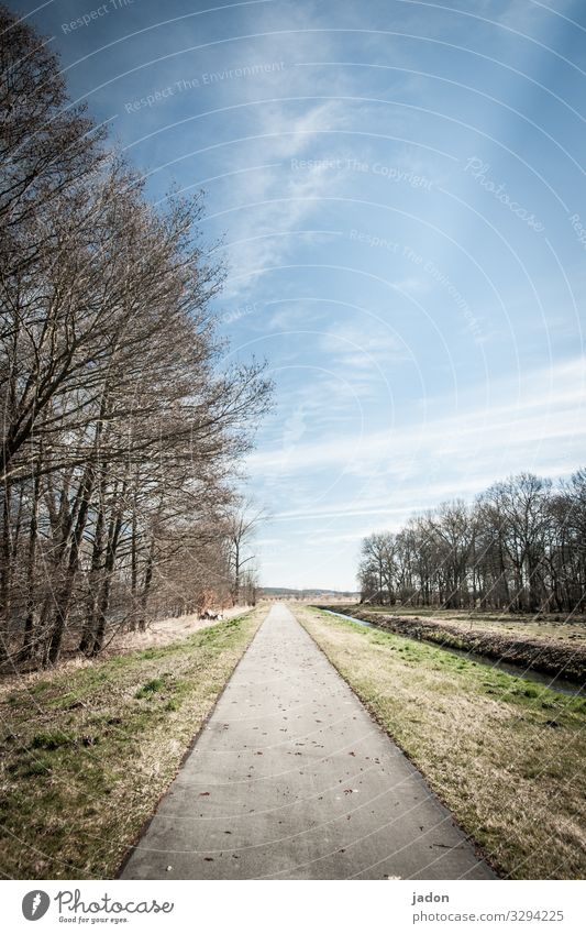 Sky Nature Landscape Tree Relaxation Calm Lanes & trails Horizon Line Field Cycling Traffic infrastructure Peaceful Avenue Cycle path Row of trees