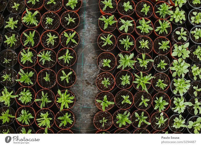Potted Plants view from above Environment Nature Uniqueness Natural Above Beginning Business Sustainability Arrangement Planning Environmental protection Growth