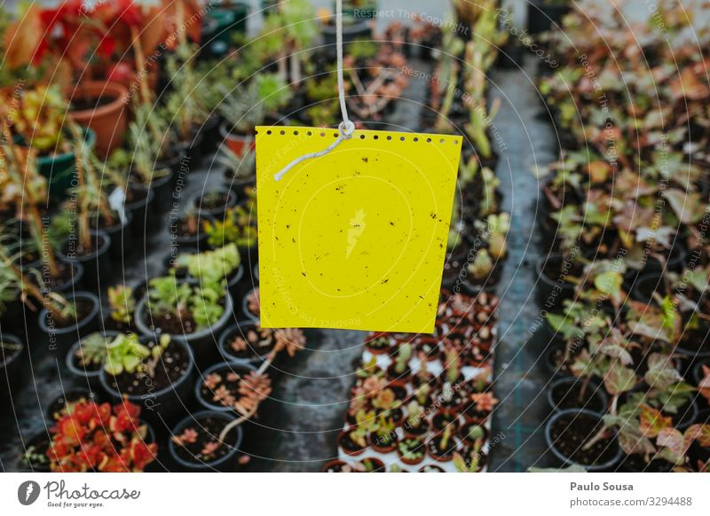 Bio Yellow Sticky Insect Trap Agriculture Forestry Environment Nature Plant Natural Business Colour Climate Testing & Control Sustainability Insect repellent