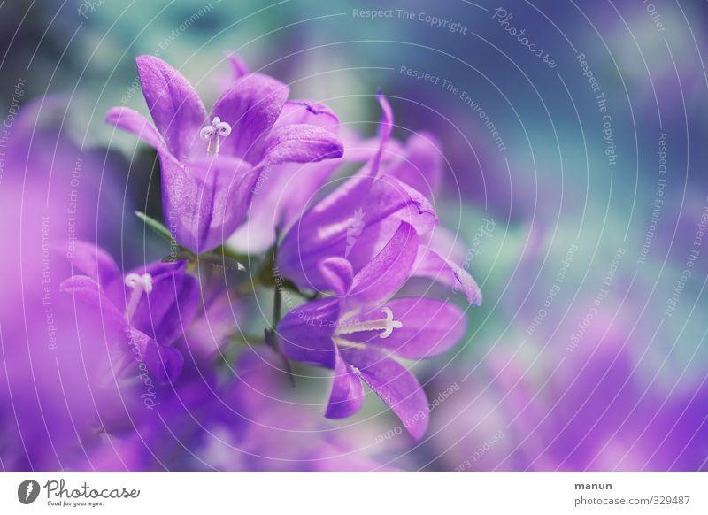 Nature Flower Spring Blossom Natural Pink Violet Delicate Spring fever Bluebell