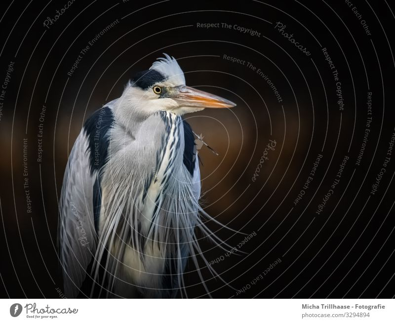 Grey Heron Portrait Nature Animal Sunlight Beautiful weather Coast Lakeside River bank Wild animal Bird Animal face Wing Grey heron Beak Head Eyes Feather