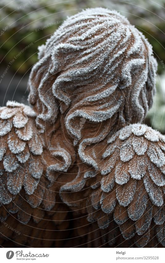Rear view of an angel with hoarfrost on hair and wings Winter Ice Frost Decoration Grand piano Hair and hairstyles Sign Angel Freeze Stand Exceptional