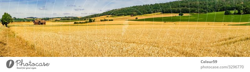 wheat field Summer Nature Yellow Background picture Wheat Wheatfield harvest season Holiday season Agriculture panorama out Field Beautiful Landscape