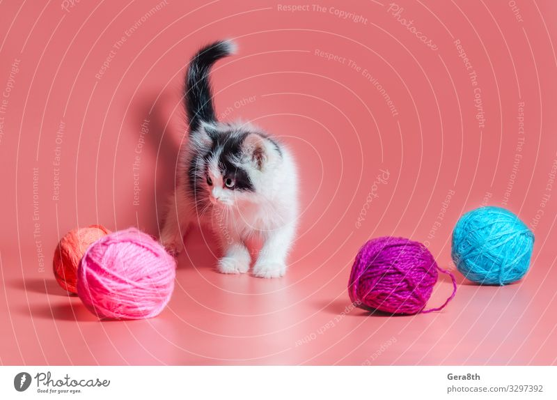 kitten with multi-colored balls of woolen threads Ball Work and employment Craft (trade) Cat Bright Pink adopt adopt a cat adopt a kitten adopted adoption