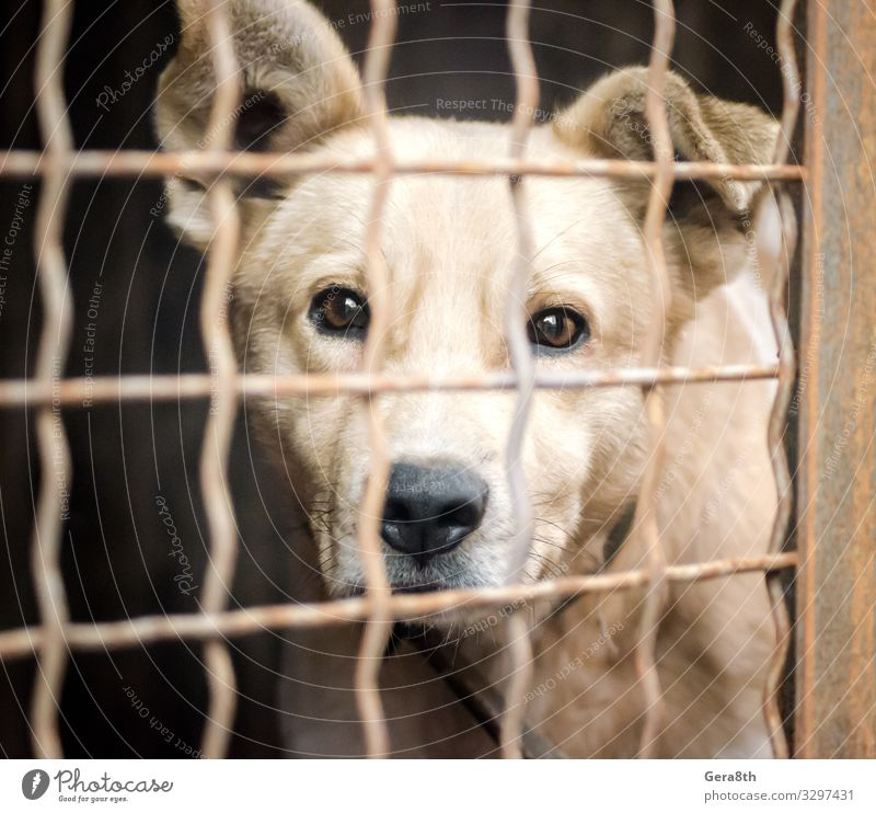 purebred puppy behind bars in a shelter Animal Elements Pet Dog Animal face 1 Emotions Hope Accommodation adopt Animal shelter asylum birdcage Cage cell cellule