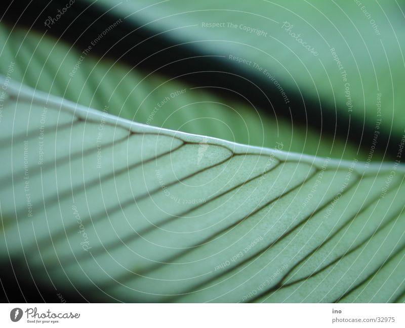 Green Leaf Line Vessel Branchage Parallel Joist Prison cell Leaf green