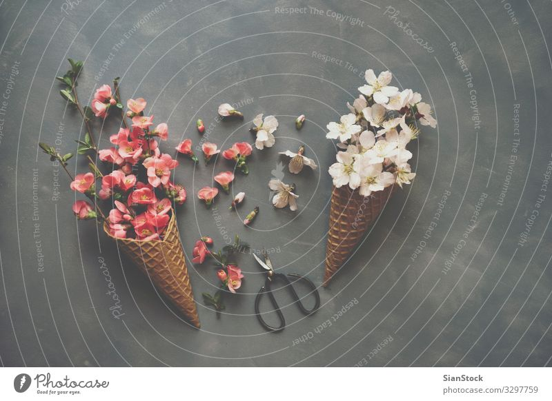 Flowers in ice cream cone on cement background Design Scissors Nature Bouquet Love Natural Pink Romance Ice-cream cone cornet Waffle flat lay Top Vantage point