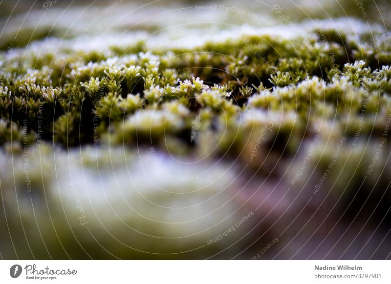 moss Environment Nature Plant Earth Moss Foliage plant Garden Meadow Forest Fresh Wet Natural Under Brown Green White Patient Calm Cold Frost Endurance Time