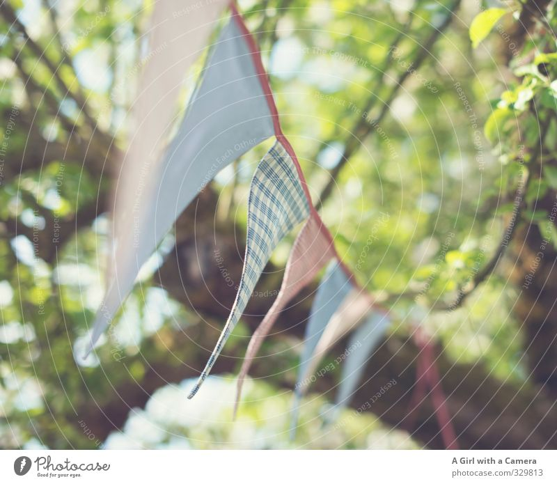 Spring will come Nature Tree Garden Cry Flag Multicoloured Decoration Friendliness Subdued colour Exterior shot Abstract Copy Space right Day Light