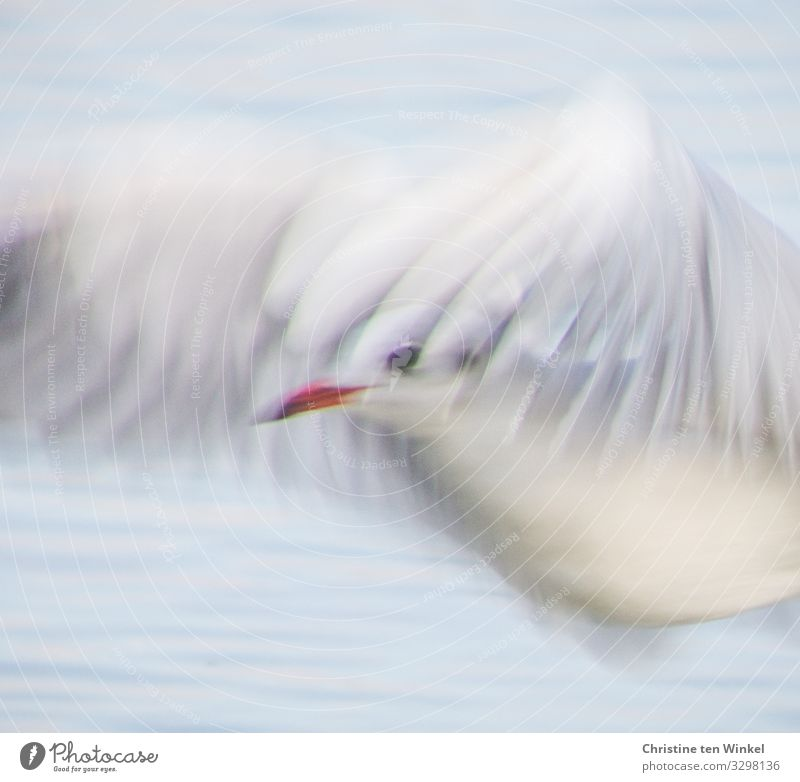 Vacation & Travel Blue Beautiful Water White Red Animal Environment Natural Tourism Exceptional Bird Flying Bright Free Dream