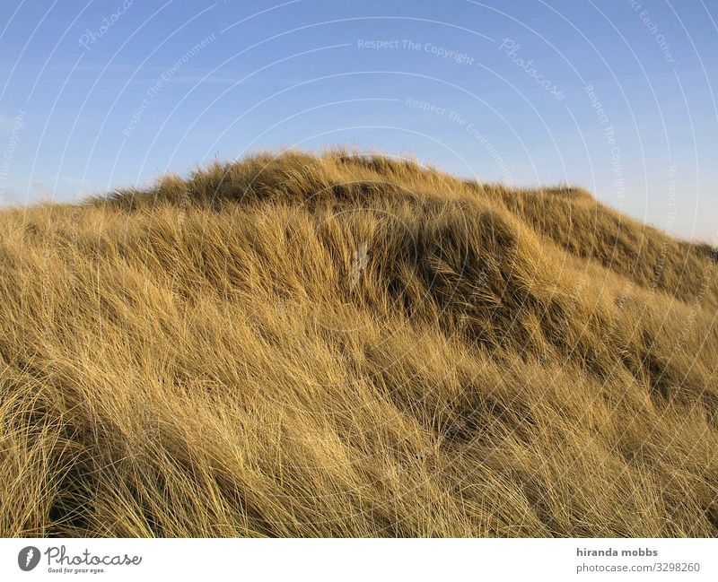 dune fuzz Nature Landscape Sand Sky Summer Beautiful weather Grass Hill Coast Lakeside North Sea Baltic Sea Island Blue Brown Yellow Gold Calm Esthetic