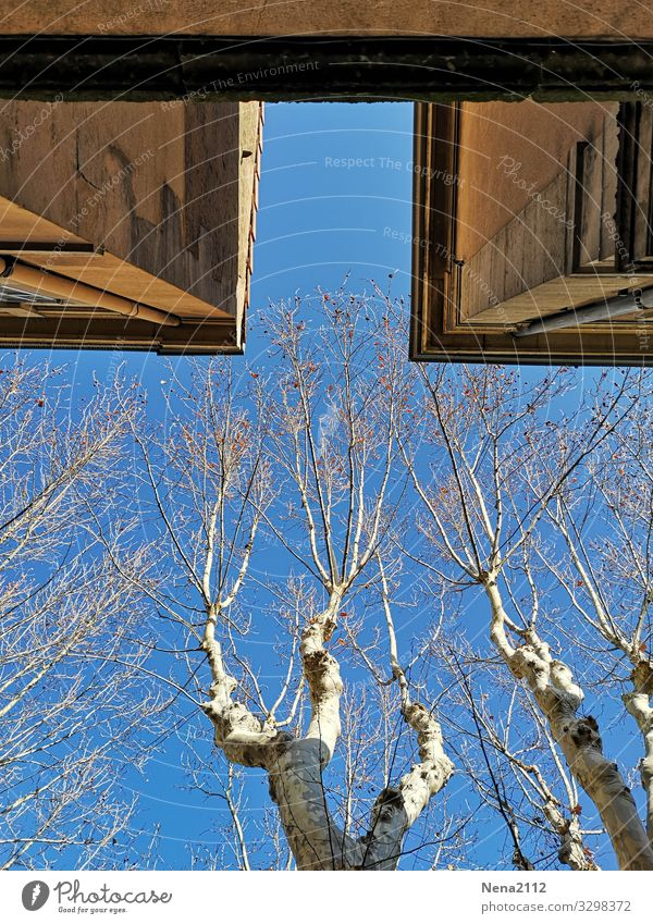 far view | view upwards Town Wall (barrier) Wall (building) Facade Blue Sky Tree American Sycamore Provence Southern Winter Cold Blue sky Beautiful weather