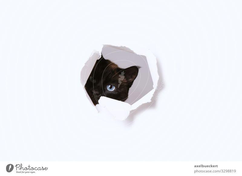 Cat Animal Funny Playing Cute Paper Observe Curiosity Pet Hollow Surveillance Spy Gaze