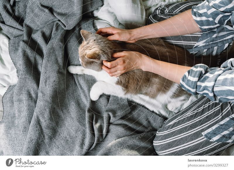 Woman petting her british breed cat in bed Autumn Bed Bedclothes Blanket Duvet Bonding Cat Caucasian comfy Cozy Cute flatlay Fur coat Hand Home hygge Lifestyle