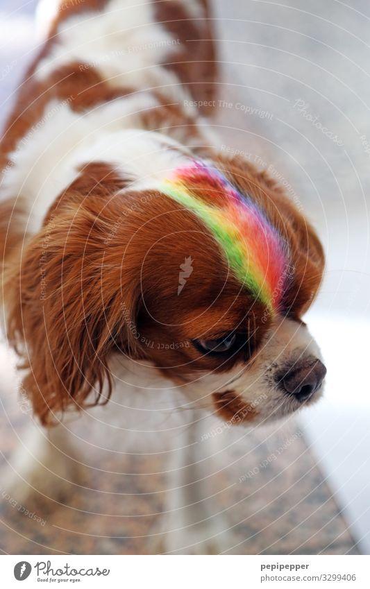 dog Style Work of art Hair and hairstyles Punk Animal Pet Dog Animal face Pelt 1 Stripe Cool (slang) Multicoloured Rainbow Colour photo Exterior shot