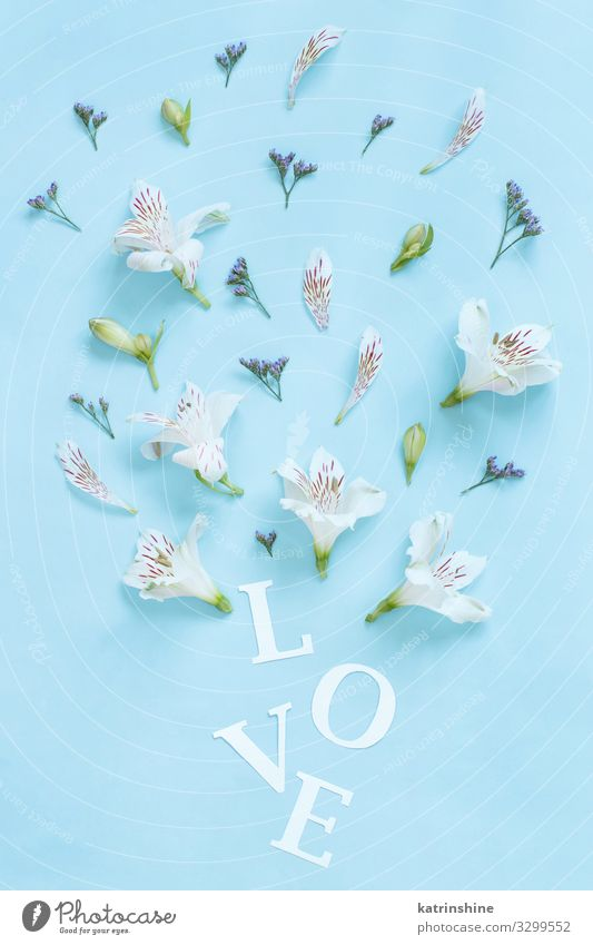 Flowers and word LOVE on a light blue background Woman Blue White Adults Copy Space Above Design Decoration Creativity Wedding Mother Word Text Blossom leave