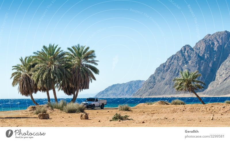 car under the palm trees on the Red Sea in Egypt Relaxation Vacation & Travel Tourism Summer Beach Ocean Waves Mountain Nature Landscape Plant Sand Sky Tree