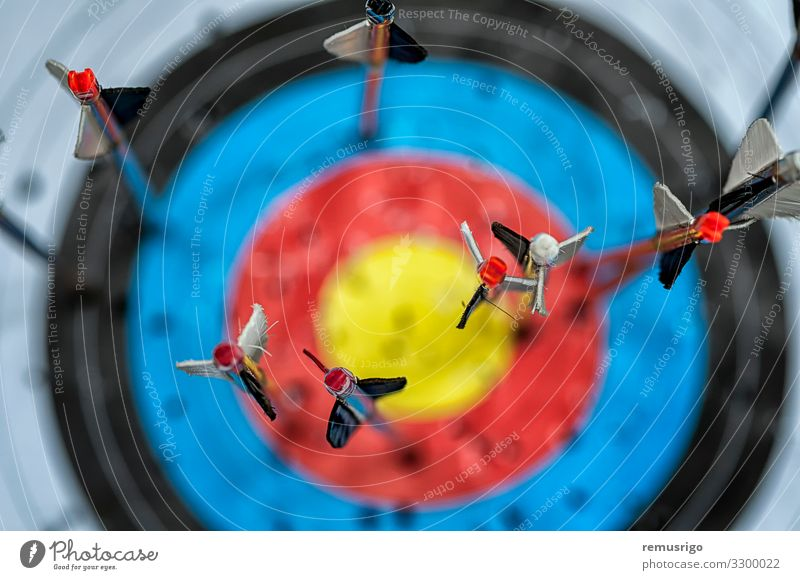 Arrows in target Hunting Tool War airfoils Archer Archery arrow attack bow Hunter fletcher fletching nock Object photography projectile Weapon wood Colour photo