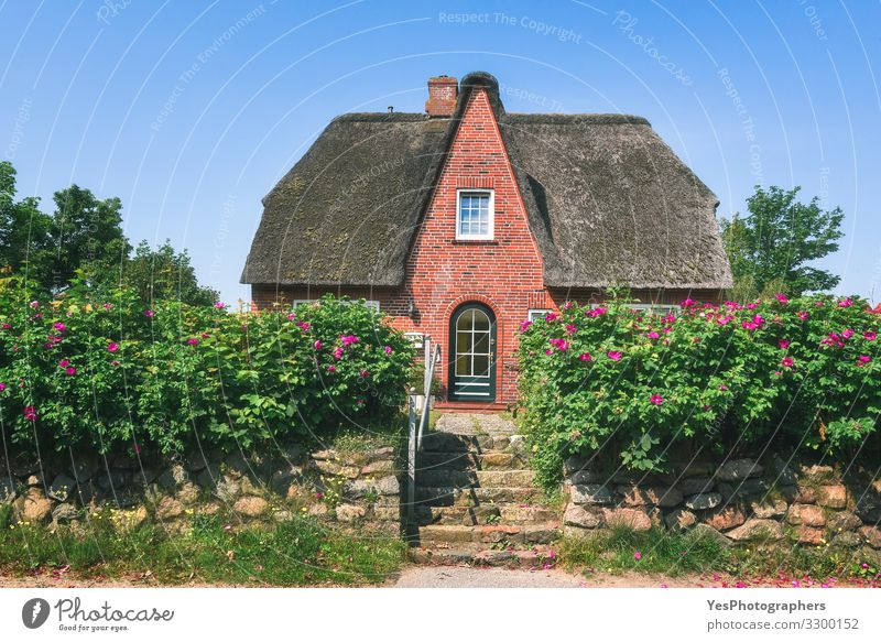Red brick Frisian house with roses hedge on Sylt island. Luxury Summer House (Residential Structure) Dream house House building Landscape Sunlight Spring Flower